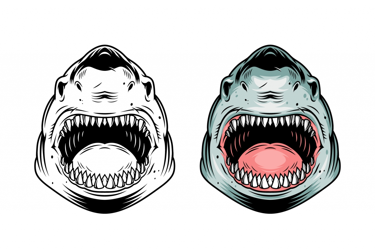 Angry shark head vintage design in color and monochrome versions on white background