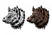 Colorful and monochrome serious wild boar heads with tusks in vintage style
