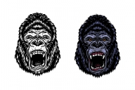 Vintage aggressive gorilla heads in color and monochrome versions on white background