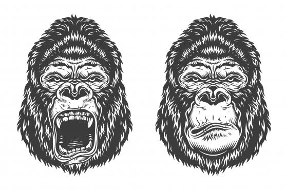 Two gorillas